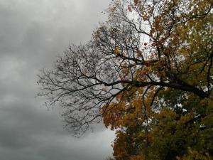 Herbstbaum-fast-kahl