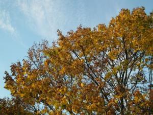 Oktober-Laub-gelb-braun